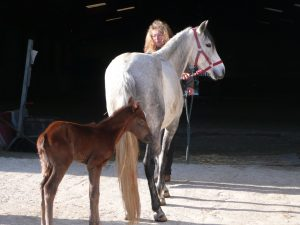 Anne et ses chevaux